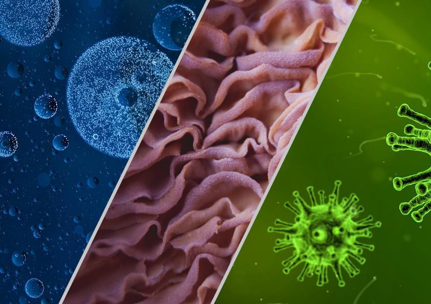 Les germes, qu'est-ce que c'est ?