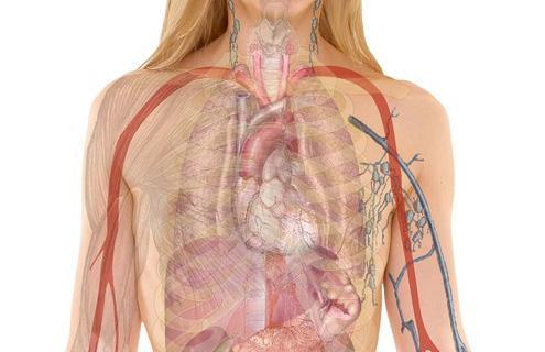 Système immunitaire : quand la maladie est déclarée